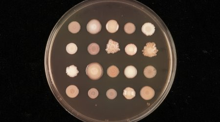 Microbial plate