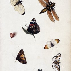 Insect studies in the watercolour sketchbook of Anna Sophia Clitherow (c. 1804-1814) John Innes Historical Collections