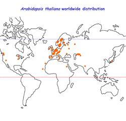 Arabidopsis thaliana worldwide distribution