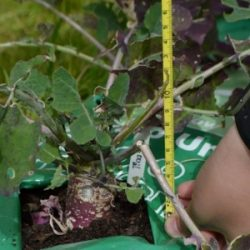 The schools involved will each be sent a device that will automatically record temperature 4 times a day, and once a week they will be asked to measure the height of the plants and count the number of leaves.