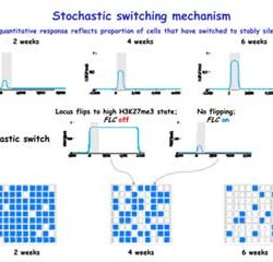 Stochastic switching mechanism