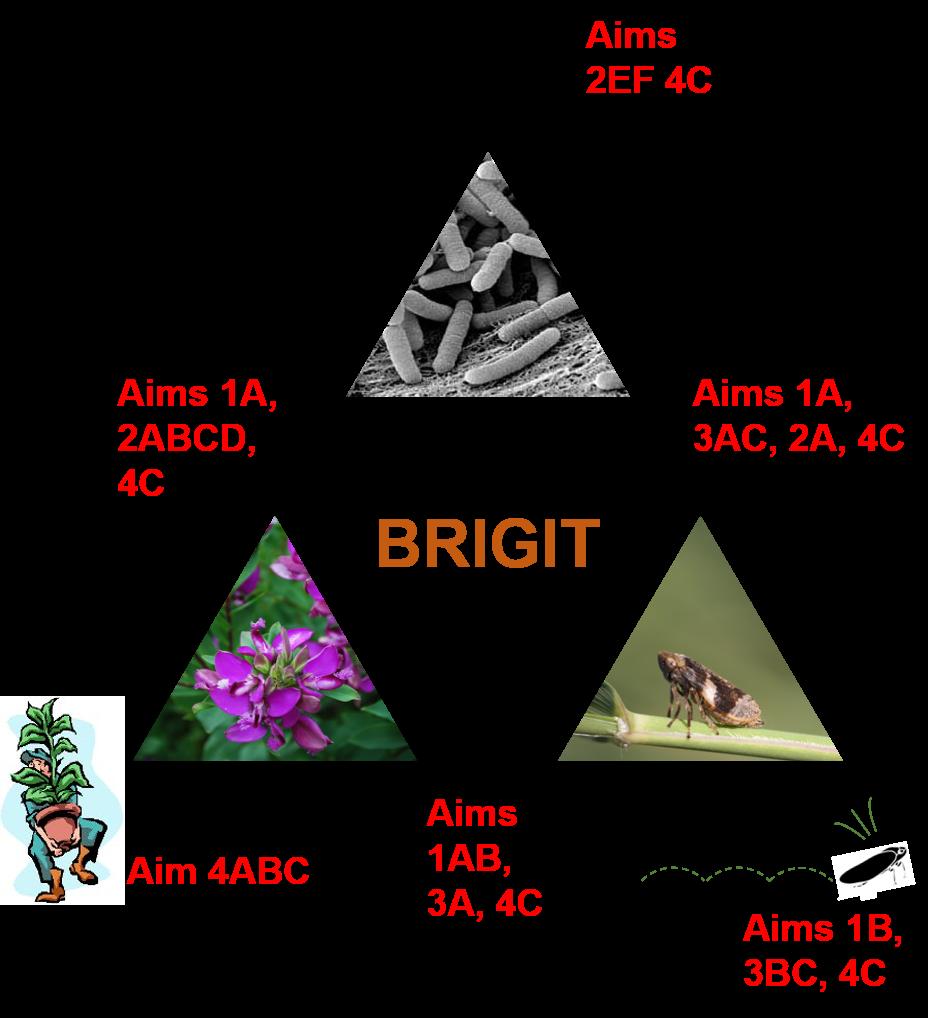 BRIGIT project aims