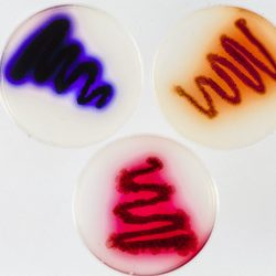 Hybrid antibiotic Streptomyces plate