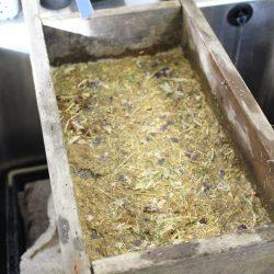 Grasspea in the lab