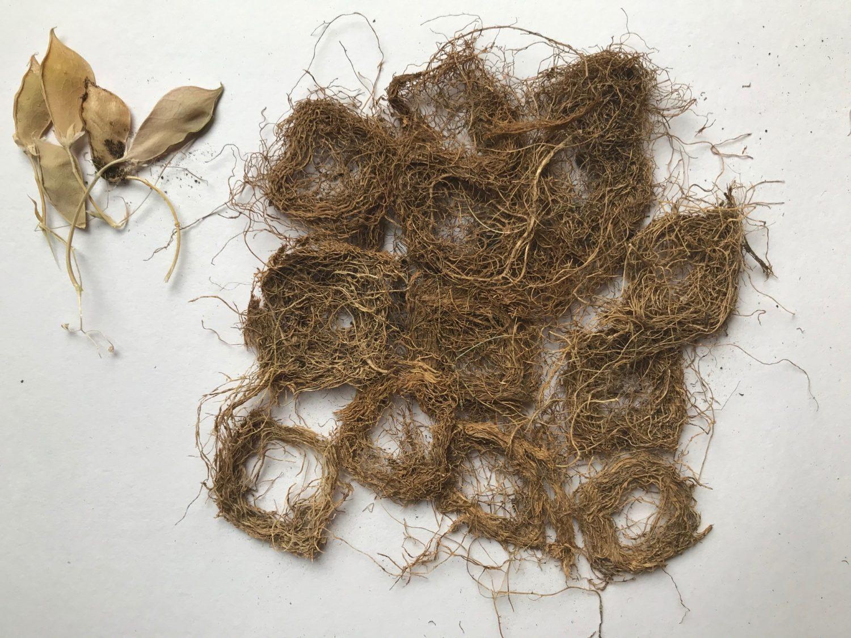 Textile roots