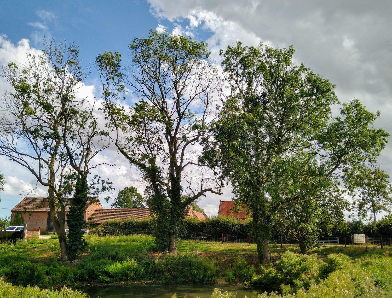Ash beside a farm pond